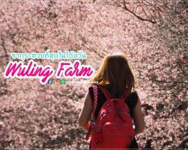 Wuling Farm Taiwan