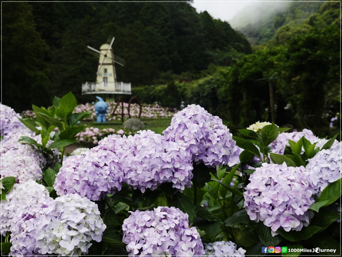 Sun Link Sea Flower Center