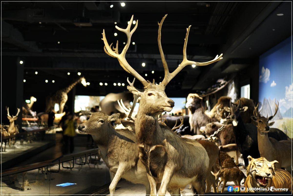 Chimei Museum Tainan