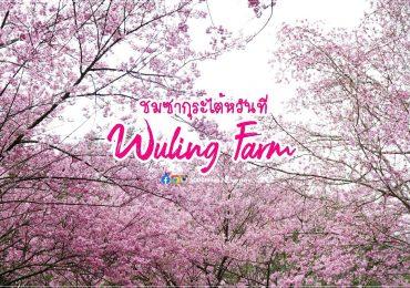 ซากุระไต้หวัน @ Wuling Farm