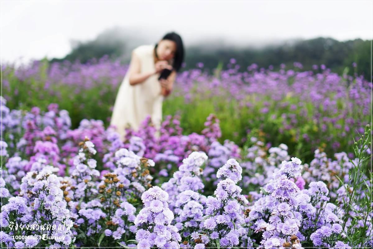 ยิ่งยงสวนดอกไม้ เชียงใหม่