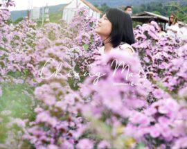 สวนดอกไม้ เชียงใหม่