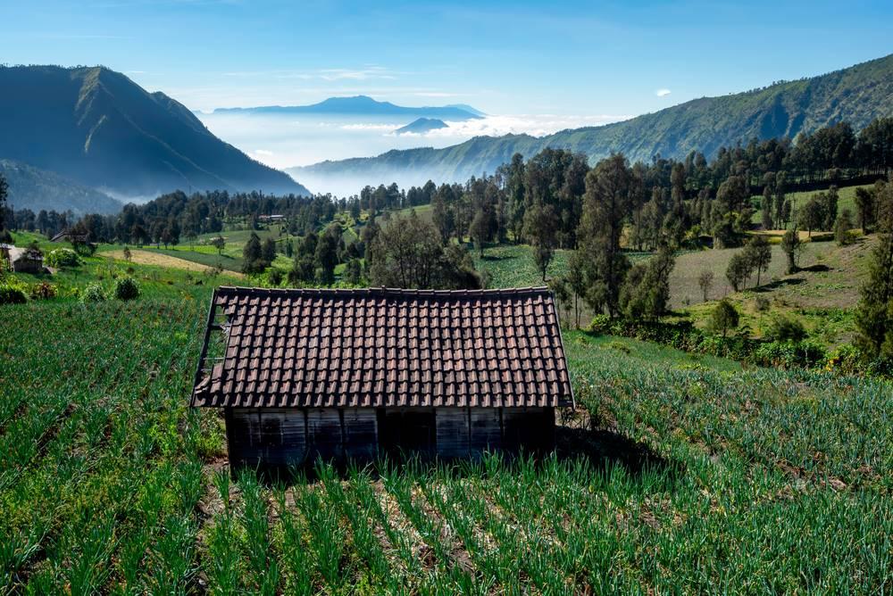 เซโมโร (Cemoro) อินโดนิเซีย (Indonisia)