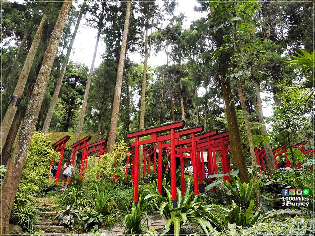Xitou Monster Village หมู่บ้านปีศาจซีโถว